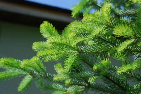 もみの木5