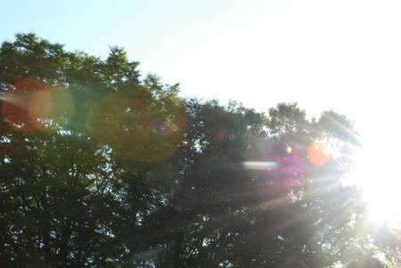 大樹と朝日4
