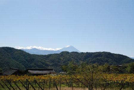 ぶどう棚と富士山