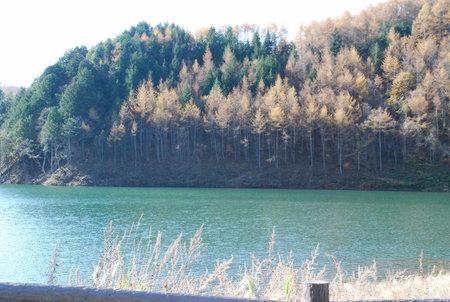 乙女湖とカラマツ4