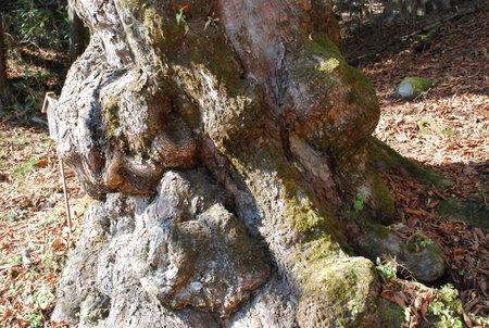 栃の木顔11