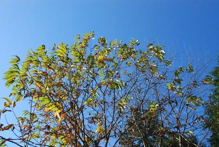 秋色24くりと青空