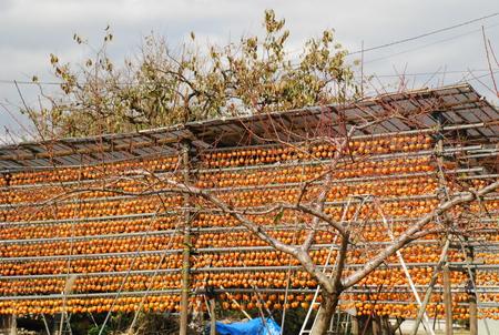 えんざん界隈の干し柿18