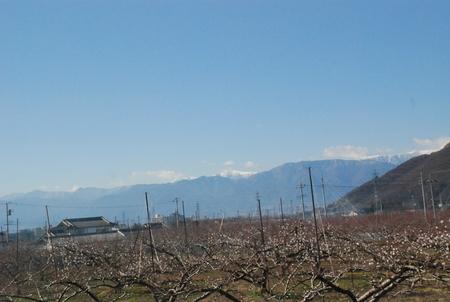 桃畑から3