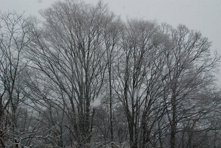 雪景色22-2