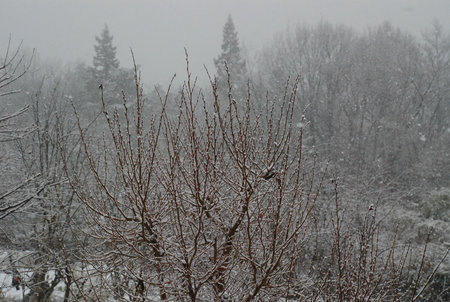 雪景色13