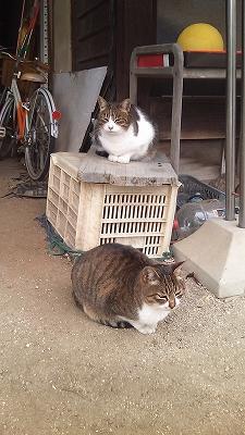 チビ&ミィミィ