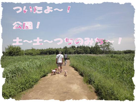 DSC01109-1.jpg