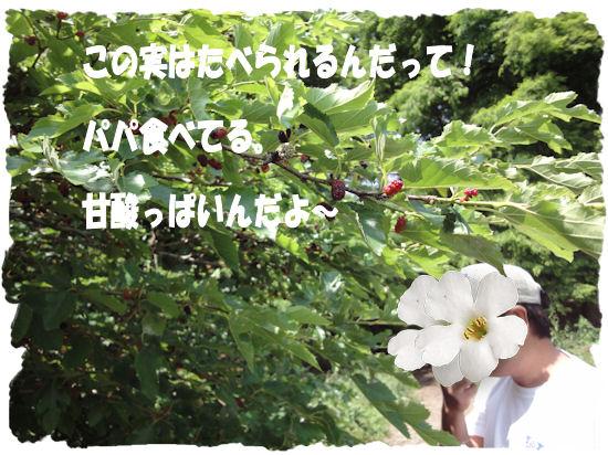 DSC01116-1.jpg