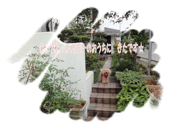 DSC01180-1.jpg
