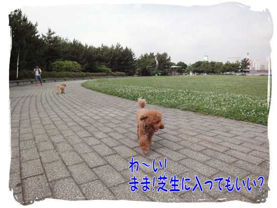 DSC01193-1.jpg