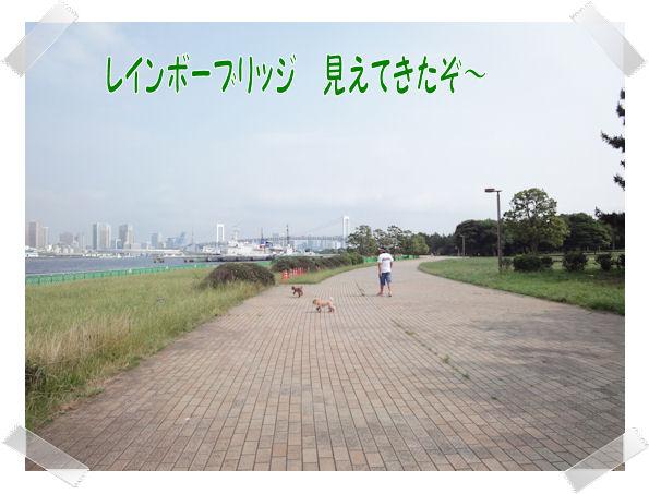 DSC01211-1.jpg