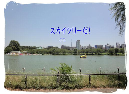 DSC01301_20110721193102.jpg
