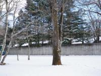 091219軽井沢 (2)35