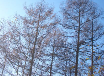 tree1109.jpg