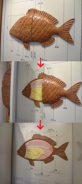 長浜鮮魚市場・市場会館内 魚っちんぐプラザ(扉式の魚解体図)
