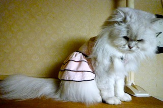 春色ドレス