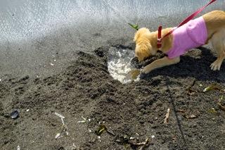 穴掘りして海水がたまって