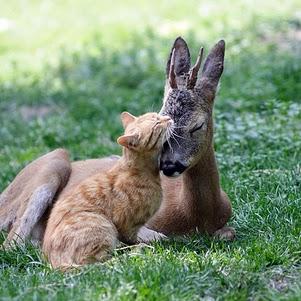 cat-deer_1974777i.jpg