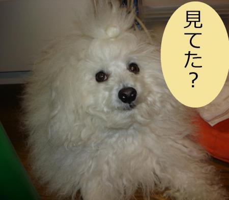 005鬥ャ鬪ィ_convert_20091211234801