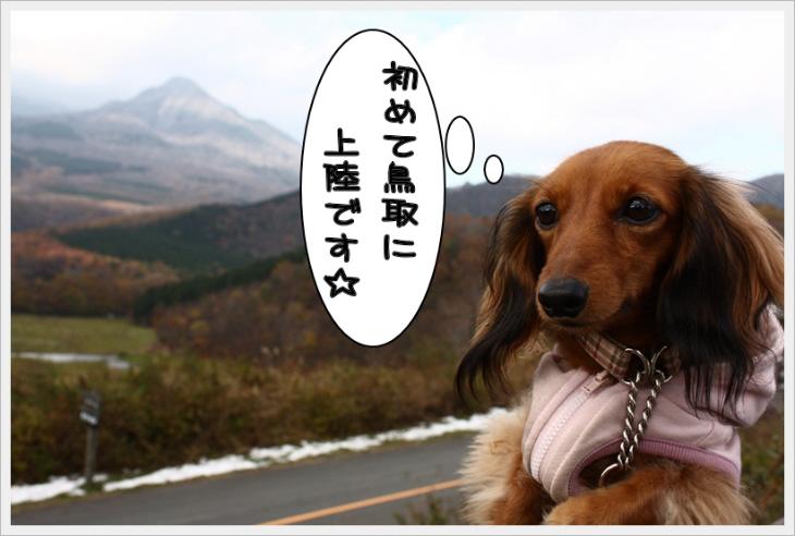 鳥取県上陸!