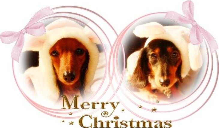 素敵なクリスマスを・・・