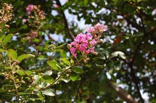 garden4 2010