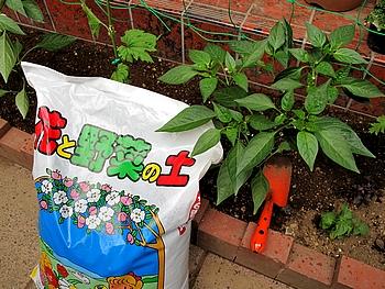 農協で買った 花と野菜の土