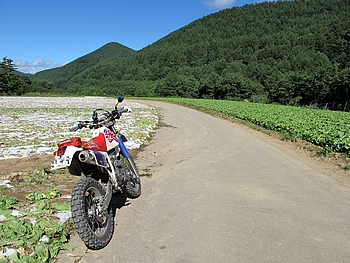 長野県側の広大な畑
