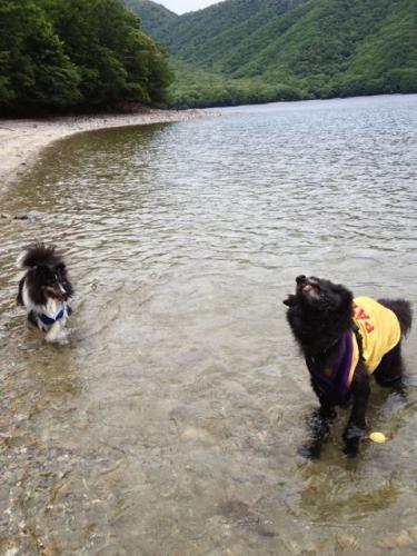 中禅寺湖で泳ぐ5