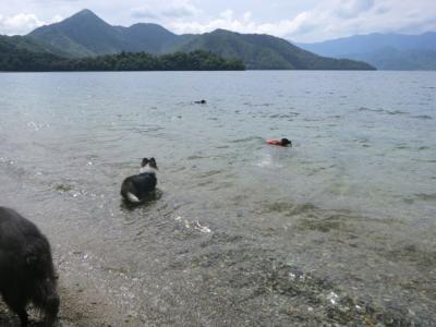 中禅寺湖で泳ぐ12