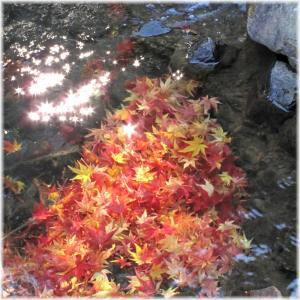 水底紅葉111210G 028
