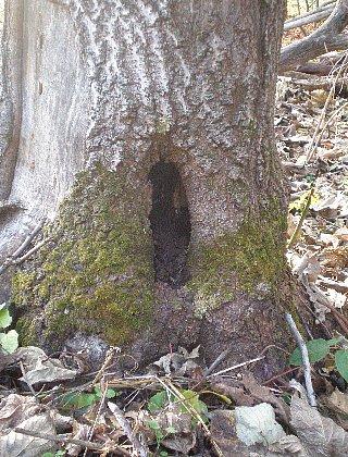 穴の中には土が