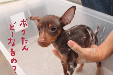 お風呂2-2