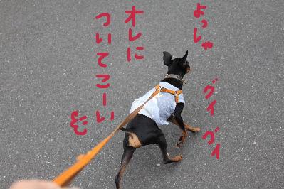 一緒にお散歩1