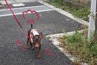 一緒にお散歩3