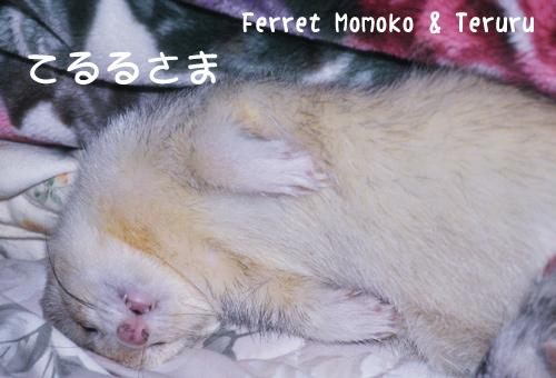 terurusama-2011-1.jpg