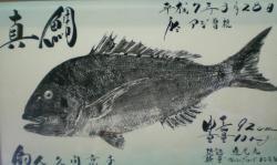 平成7年真鯛
