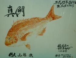 平成17年真鯛