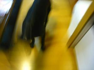 20091127_10.jpg