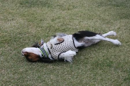 Fetch!1.jpg