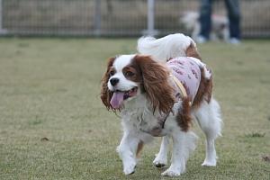 Fetch!10.jpg