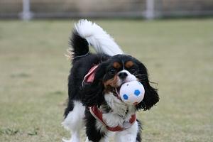 Fetch!11.jpg