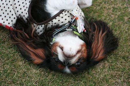 Fetch!5.jpg