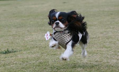 Fetch!6.jpg