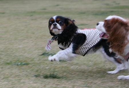 Fetch!7.jpg