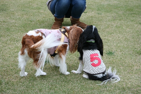 Fetch!9.jpg