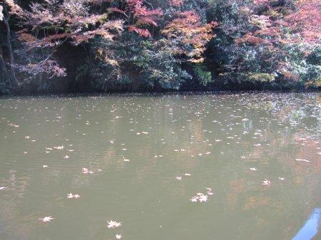 kameyamako7_20111212212337.jpg