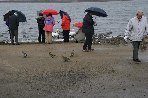 ウトナイ湖#2