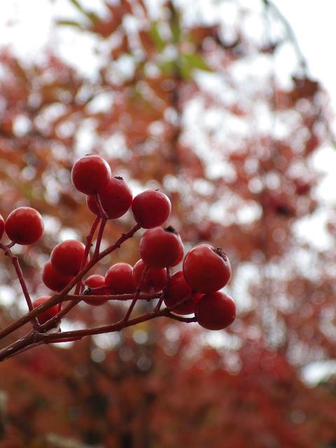 秋の1枚2013